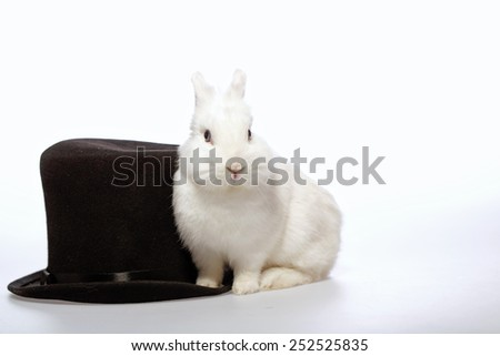Magical rabbit. Closeup image of a cute white bunny sitting by the magicians black hat isolated on white background - stock photo