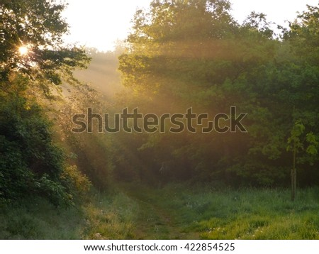 magical rys of light in a forest in sunrise time - stock photo