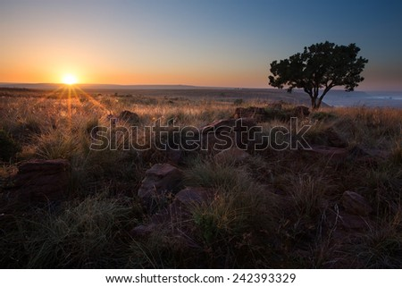Magical sunset in Africa with a lone tree on a hill and no clouds - stock photo