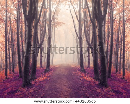 Magical symmetry in foggy forest - stock photo