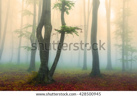 Magical trees into the misty forest - stock photo