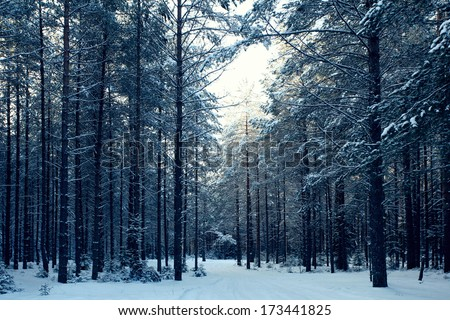 magical winter forest, a fairy tale, mystery - stock photo