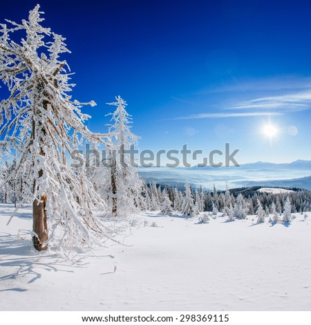 magical winter snow covered tree