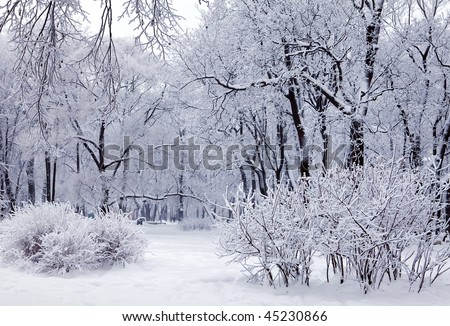 Magical winter trees covered with snow - stock photo