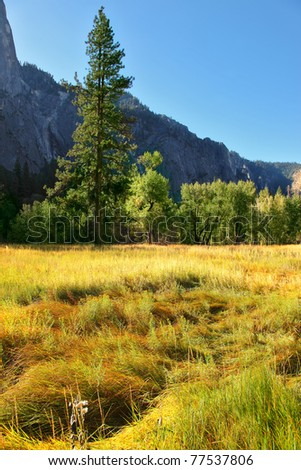 Magnificent glade with a yellow grass in valley Yosemite park. October, early morning - stock photo