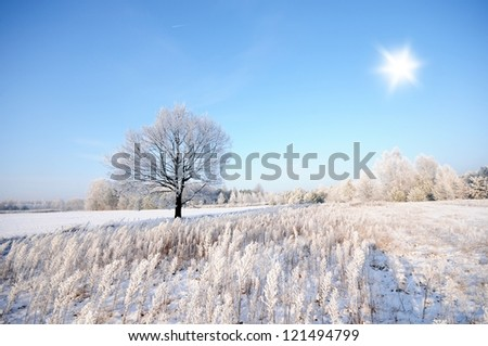 Magnificent hoarfrost on birches. A winter forest in a hard frost. Poland - stock photo