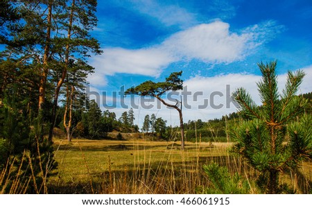 Magnificent landscape view at weirdly looking tree on Zlatibor mountain in Serbia