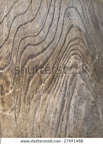 Magnificent old keyaki wood grain  (Zelkova serrata, Japanese zelkova) , with Weathered grain and texture.