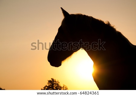 Magnificent profile of a powerful Belgian Draft horse silhouetted against rising sun in rich sepia tone - stock photo