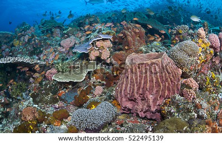 Magnificent reef scene of Komodo Island, Indonesia.