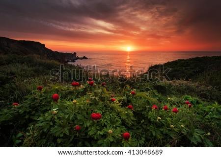 Magnificent sunrise view with beautiful wild peonies on the beach near Tylenovo, Bulgaria - stock photo