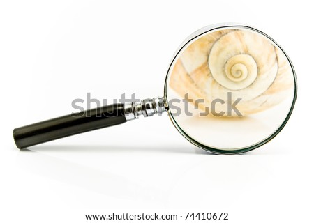 Magnifier on spiral shell isolated on white - stock photo