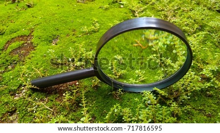 magnifier over Green moss on rock floor with nature. out of focus, blurry, too soft