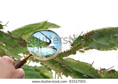 Magnifying glass looking at Aphids. - stock photo