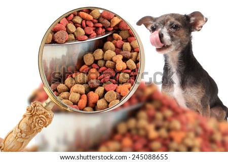 Magnifying glass zooming in on dog food with cute little chihuahua dog  licking his nose on a white background - stock photo