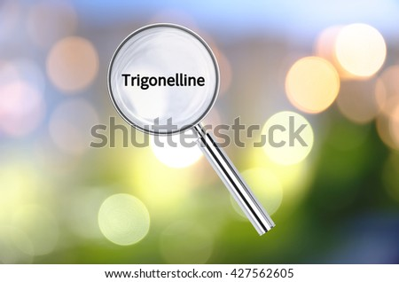 Magnifying lens over background with text Trigonelline, with the blurred lights visible in the background. 3D rendering. - stock photo