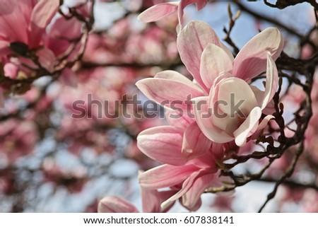 Spring Season Wallpaper Background