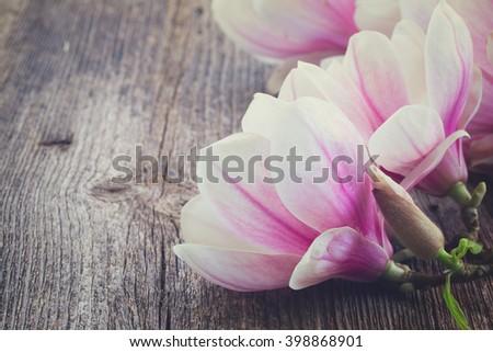 magnolia fresh spring flowers  on wooden background, retro toned - stock photo