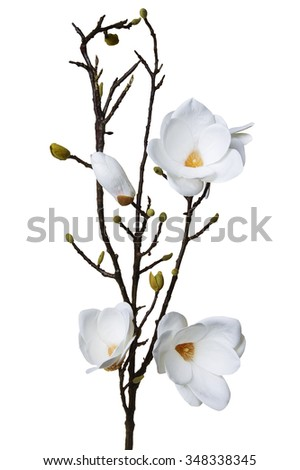 Magnolia white artificial flower isolated on white background - stock photo