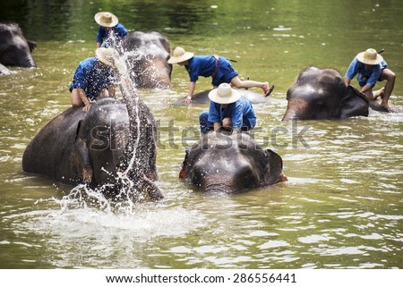 Mahouts bath and clean the elephants in the river. Lampang ,Thailand. - stock photo
