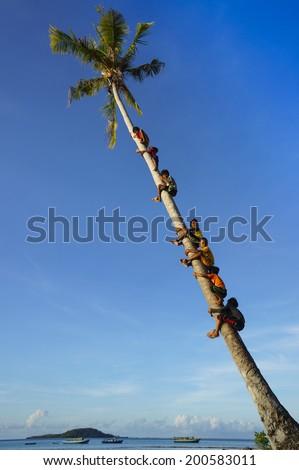MAIGA ISLAND, MALAYSIA - JUNE 5 : Unidentified children of Sea Gypsy Bajau Tribe climbing coconut tree on June 5th, 2014 in Maiga Island, Sabah, Malaysia.  - stock photo