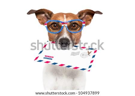 mail dog - stock photo