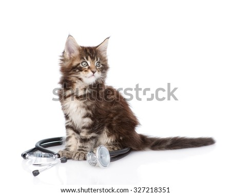 maine coon cat with a stethoscope looking away. isolated on white background - stock photo