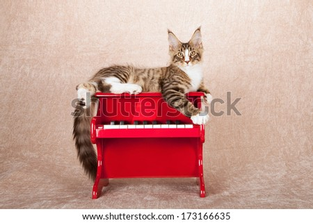 Maine Coon kitten lying on top of red toy piano against beige background