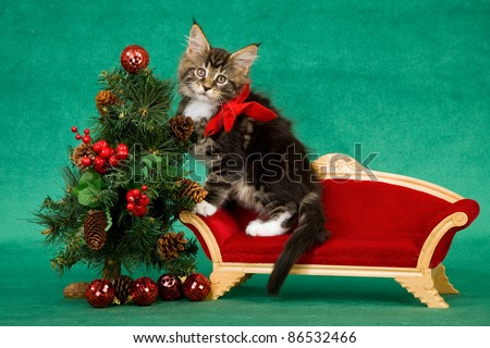 Maine Coon kitten on red sofa with Christmas tree - stock photo
