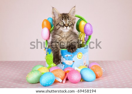 Maine Coon kitten sitting in Easter basket with easter eggs - stock photo