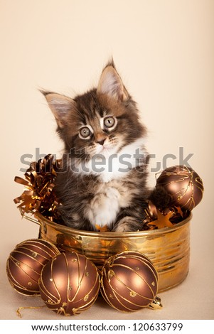 Maine Coon kitten sitting inside copper container with christmas decorations on beige background - stock photo