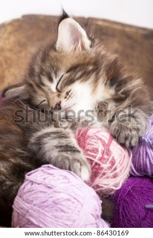 Maine Coon kitten sleeping resting in a basket of balls of yarn - stock photo