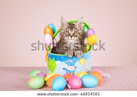 Maine Coon kitten with Easter basket and eggs - stock photo