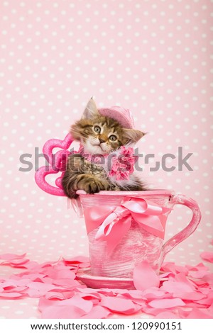 Maine Coon kitten with pink hat sitting inside pink cup with pink ribbon bow and pink hearts and fake rose petals on pink background - stock photo