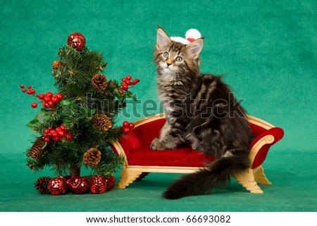 Maine Coon kitten with santa hat on sofa with Christmas tree - stock photo