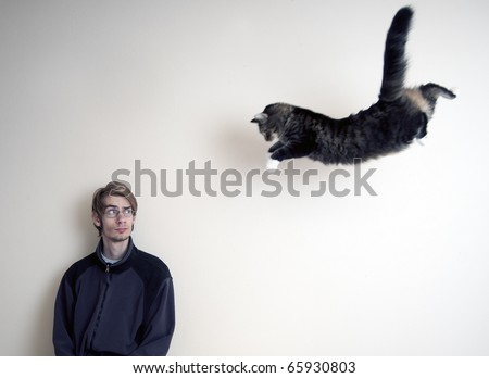Maine Coon kitty cat jumping in mid air to pounce his master. - stock photo