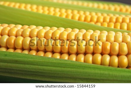 maize cob detail between green leaves - stock photo