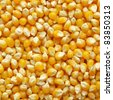 Maize corn useful as a food background - stock photo