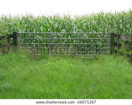 Maize field with a gate in front - stock photo