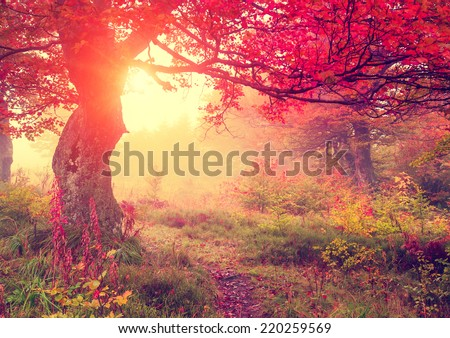 Majestic autumn trees in forest glowing by sunlight. Red autumn leaves. Dramatic morning scene. Carpathian, Ukraine, Europe. Beauty world. Retro style filter. Instagram toning effect. - stock photo