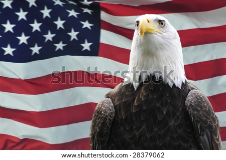 Majestic Bald eagle in front of USA flag - stock photo