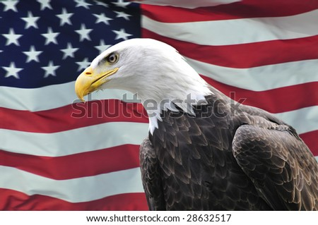 Majestic Bald Eagle looking sideways in front of USA flag