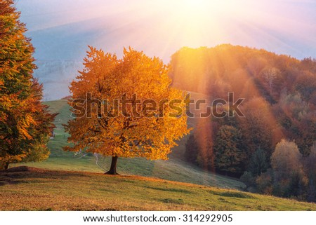 Majestic beech tree with sunny beams at mountain valley. Dramatic colorful evening scene. Carpathians, Ukraine, Europe. - stock photo