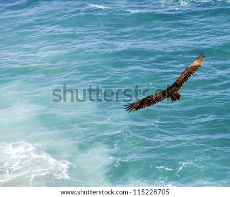 majestic bird with full wingspan soaring over the pacific ocean