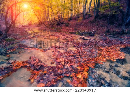 Majestic colorful forest with sunny beams. Dramatic scene. Red autumn leaves. Crimea, Ukraine, Europe. Retro style filter. Instagram toning effect. Beauty world. - stock photo