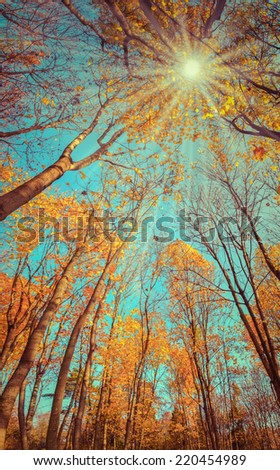 Majestic colorful forest with sunny beams. Natural park. Dramatic morning scene. Red autumn leaves. Carpathians, Ukraine, Europe. Retro style. - stock photo