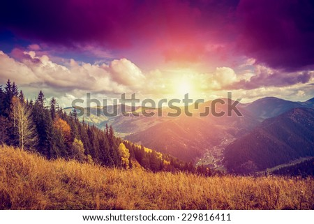 Majestic colorful forest with sunny beams. Red autumn leaves. Carpathians, Ukraine, Europe. Beauty world - stock photo