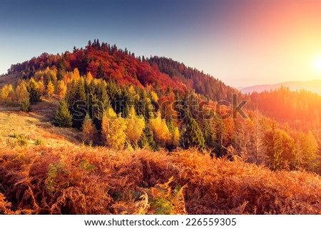 Majestic colorful landscape with sunny beams at mountain valley. Natural park. Dramatic morning scene. Red and yellow autumn leaves. Carpathians, Ukraine, Europe. Beauty world.  - stock photo