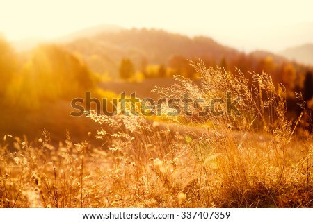 Majestic field in the sunlight. Dramatic and picturesque morning scene. Warm toning effect. Retro and vintage style, soft filter. Carpathians. Ukraine, Europe. Beauty world. - stock photo