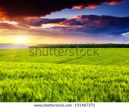 Majestic landscape in the field under daybreak - stock photo